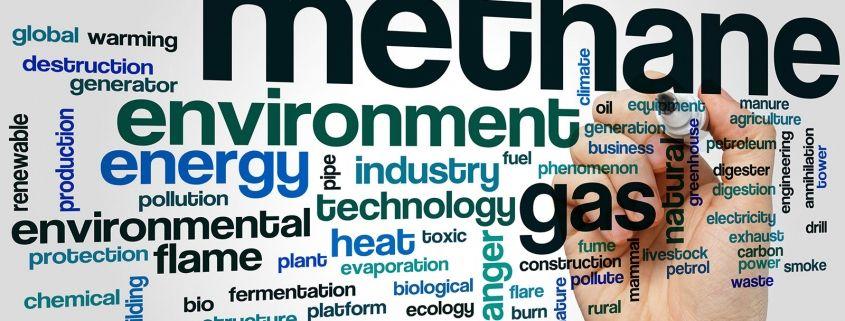 Reducir el Metano en los Rumiantes-Una buena oportunidad